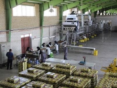 کارخانه انواع کشمش